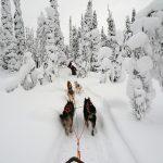 フィンランドの初雪の基準が厳しすぎる!