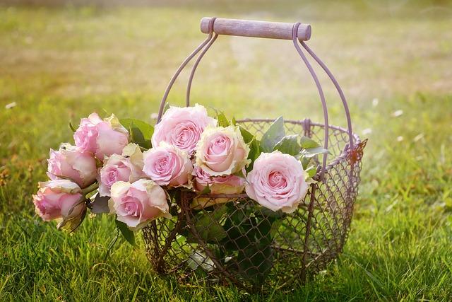 かごに入った薔薇